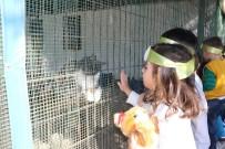HALIL MEMIŞ - Çocuklardan Sevimli Dostlarına Ziyaret