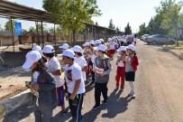 HAYVAN BAKIM EVİ - Diyarbakır'da Dünya Hayvanları Koruma Günü Kutlandı