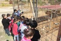 HÜSEYİN OLAN - Öğrencilere Hayvan Sevgisi Aşılanıyor