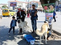 MUSTAFA ASLAN - Sivas'ta Hayvanları Koruma Günü Etkinliği