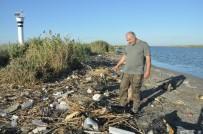SEYHAN NEHRİ - Tarsus Sahilindeki Balık Ölümleri Araştırılıyor