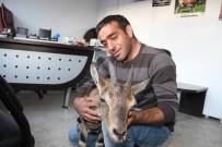KUŞBURNU - Erzurumlu Hayvanseverden Örnek Davranış