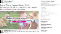 FENOMEN - Twitter Fenomeni Hayvanlara Sahip Çıktı