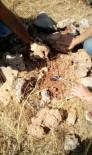 Dargeçit İlçesinde, Teneke İçinde Tuzaklanmış 15 Patlayıcı Ele Geçirildi
