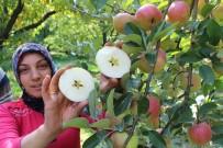 POTASYUM - 5 Yıldızlı Elma Yüz Güldürdü