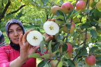 POTASYUM - Amasya'da Elma Hasadı Yüz Güldürdü
