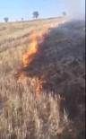 CIHANGAZI - Anız Yangınından Sıçrayan Alevler Ağaçlandırma Sahasındaki Fidanları Kül Etti