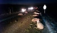 KURUÇAY - Kamyonet'in Çarptığı 44 Koyun Telef Oldu