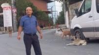 Okul Önünde Başıboş Köpek Tehlikesi