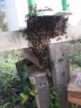 Sinop'ta Arı Kovanlarına Sonbahar Bakımı