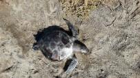Burhaniye'de Ölü Yavru Caretta Caretta Bulundu