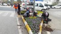 HERCAI - Akçakoca Çiçeklendiriliyor