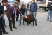 BÜYÜKBAŞ HAYVANLAR - Karakoçan'da 26 Çiftçiye Hayvan Hibesi Yapıldı