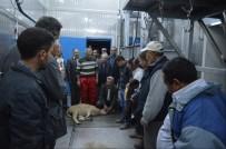 İvrindi'de Kurban Kesim Kursları İlgi Gördü