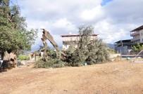 FUAT GÜREL - Milas'ta Hortum Bine Yakın Ağaca Zarar Verdi
