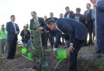 ÇATALCAM - Hitit Üniversitesi Hatıra Ormanı Oluşturuldu