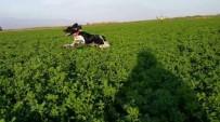 PARA ÖDÜLÜ - Kaybolan Av Köpeğini Bulana Para Ödülü Verecek