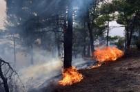 SERENLI - Tokat'ta Orman Yangını Devam Ediyor