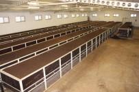 SOLUCAN GÜBRESİ - 150 milyon solucanla, yılda 500 ton organik gübre üretiyor