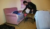 NARKOTİK KÖPEK - Bodrum'da Huzur Operasyonu