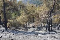 SERENLI - Tokat'ta 90 Hektar Orman Kül Oldu