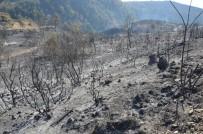 SERENLI - Tokat'ta 90 Hektar Ormanlık Alan Kül Oldu