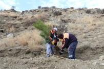 EROZYON - Sungurlu Belediyesi'nden Ağaçlandırma Çalışması
