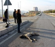 Yaralı Köpeğin Yardımına Öğrenciler Koştu