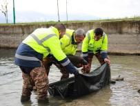 EKOLOJIK - 10 Kiloluk Sazanlar Sapanca Gölü'nün Doğal Güzelliğini Koruyacak