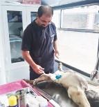 Ağlı'da Sokak Hayvanları Kısırlaştırılıyor