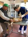 YAVRU KÖPEK - Ayıların Saldırdığı Köpek Ameliyat Edildi