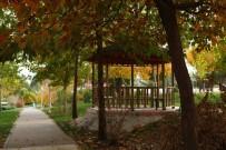 MUSTAFA TALHA GÖNÜLLÜ - Üniversitede 28 Bin 64 Ağaç Boy Gösteriyor
