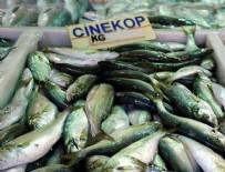 BISMILLAH - Balıkçıların yüzü çinekopla gülüyor