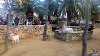 BEYOĞLU BELEDIYESI - Beyoğlulu Öğrenciler Darıca Hayvanat Bahçesi'ni Gezdi