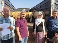 BÜYÜKBAŞ HAYVANLAR - Erdemli'de Genç Çiftçi Projesi Başladı