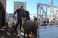 FAHRI CAN - Kahta'da Genç Çiftçilere 120 Adet Koyun Dağıtıldı