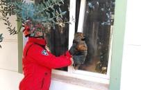 Pencereye Sıkışan Kediyi İtfaiye Kurtardı