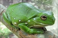 ADRENALIN - Adrenalin Dünyası'nda 'Dev Ağaç Kurbağası' Ziyaretçilerini Bekliyor