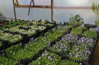 TOSMUR - Büyükşehir Alanya'da  Çiçeğini Kendi Üretiyor