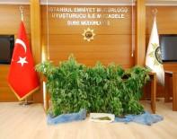 HINT KENEVIRI - İstanbul'da Uyuşturucu Serasına Çevrilmiş Eve Baskın