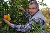 MALTA - Ukrayna'dan İade Edilen Narenciyede Yeni Zararlı Şüphesi