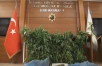 HINT KENEVIRI - Uyuşturucu Serasına Çevrilmiş Eve Baskın