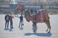 Burhaniye'de Develere Törenle Havut Giydirildi