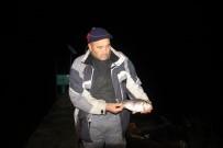 YÖRÜKLER - Baraj ve göller 'İsrail Sazanı' tehdidi altında
