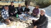 Burhaniye'de MHP İlçe Başkanı Taşdelen Zeytin Hasadına Katıldı