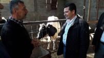 HASAN YAMAN - Erzin'de 8 Aileye Süt Sığırı Dağıtıldı
