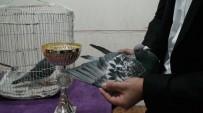 Kızıltepe'de Posta Güvercinleri Festivali Düzenlendi