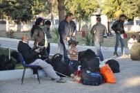 KAÇAK GÖÇMEN - Urla'da 80 Kaçak Göçmen Yakalandı