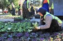 AKŞEHİR BELEDİYESİ - Akşehir Belediyesi Çiçeklendirme Çalışmalarına Başladı