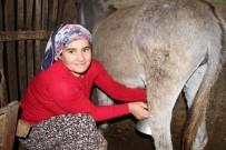 İNGILIZLER - Eşek Sütü Altın Değerinde